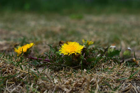yellow flowers on the ground 写真素材