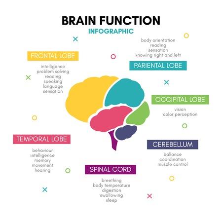 Esprit de lobe de concept d'infographie de cerveau humain créatif