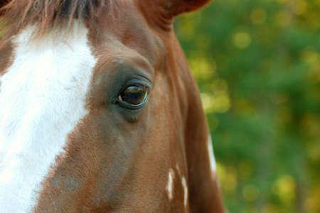 Horses Eye photo
