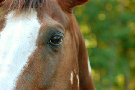 Horses Eye Stock Photo