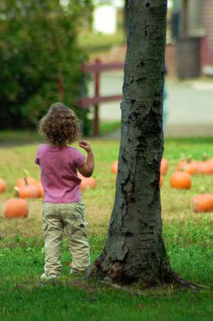 Little Girl Pumkin Picking