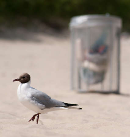 biotype: Seal Gull walking on a clean beach  Trash basket standing around  Clean Environment concept