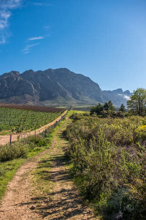 the Tulbagh valley just outside Cape own in South Africa Stok Fotoğraf