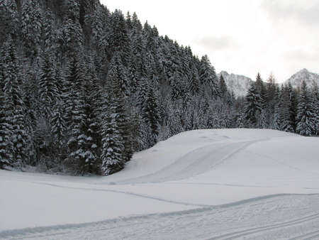 Beautiful winter landscape showing a cross-country ski run and trees in the background photo