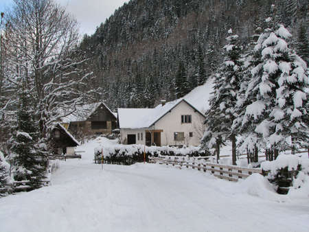 A snowy village with a road and several trees on a chilly winter day