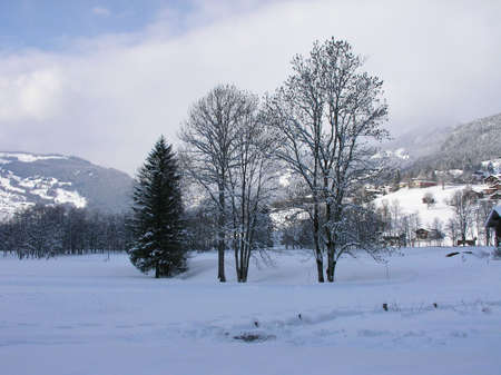 A beautiful winter landscape in Austria, showing three lonely trees Stock Photo - 766014