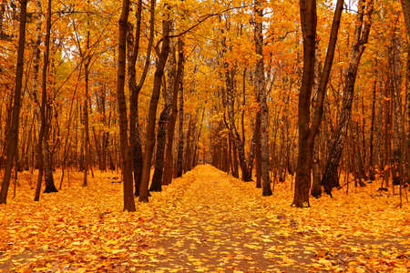 landscape mode: Autumn forest in deep autumn. Golden fall. Horizontal orientation. Landscape mode