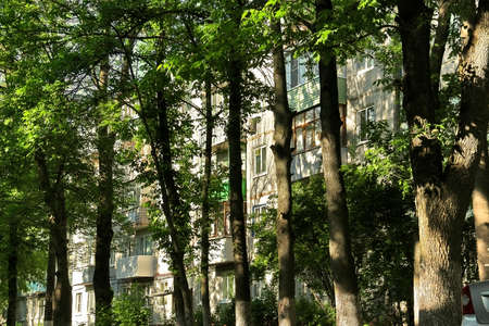 prefabricated buildings: Urban jungle: windows of residential house blocked by trunks of tall trees. Contrast of sunlight and deep shadows