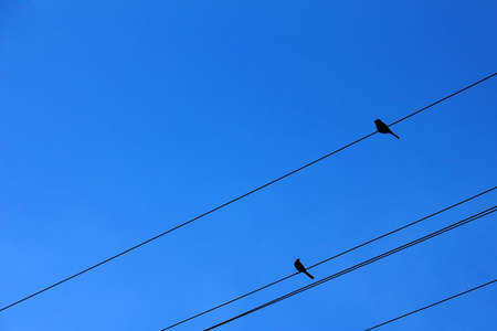 Concept: sincere interest complete indifference. Two birds on power transmission lines against bright blue sky Stock Photo