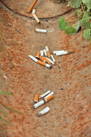 pernicious habit: Cigarette butts, thrown into drainage gutter. Shallow depth of field, focus on middle bunch