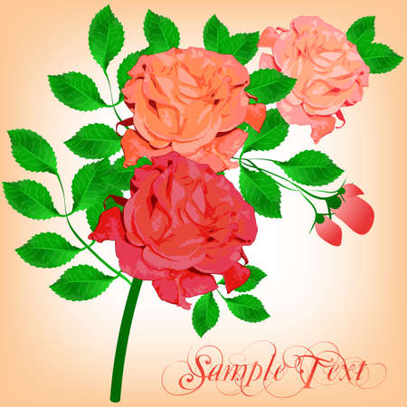 tints: Bouquet of beautiful pink roses in different tints framed by green leaves. Vector illustration Illustration
