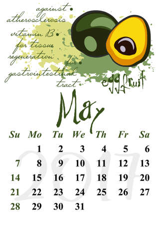 date fruit: Calendar design grid with useful properties of fruits and dates of spring month May 2017. Eggfruit. Vector illustration