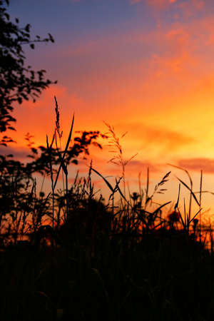 Scenic view of sunset in scarlet colors over high grass with dense clouds on evening sky. Vertical orientation