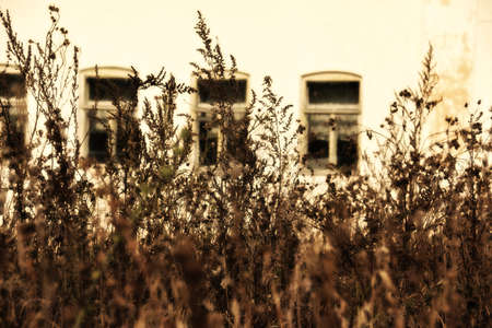 Withered grass in foreground in focus against row of windows on wall of old abandoned house out of focus. Late autumn. Retro sepia lighting effect