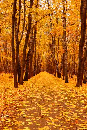 Autumn forest in deep autumn. Golden fall. Vertical orientation