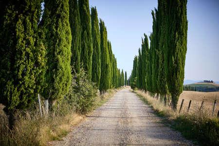 Cypress trees along rural road. Tuscany, Italy
