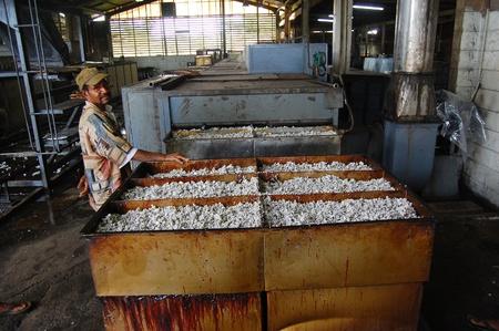Nuova Guinea: Man on fabbrica di gomma, Mareguina, Papua Nuova Guinea Editoriali
