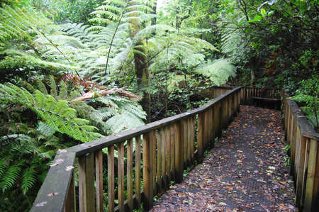 Timber walking path in park, Auckland Domain, New Zealand
