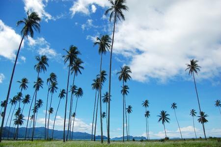Palms mountain view, Magarida village, Papua New Guinea
