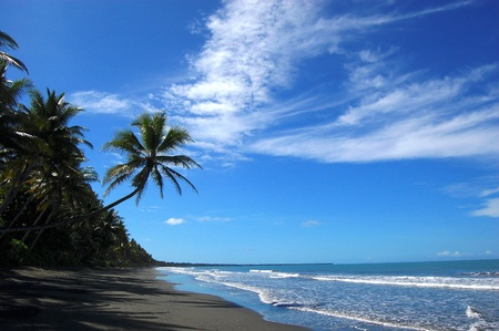 Palms at sand beach, Papua New Guinea