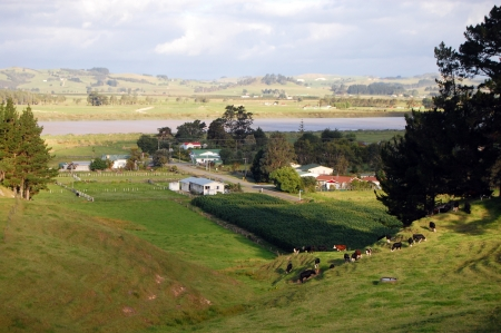 Hill view farm rural area, Dargaville, New Zealand Standard-Bild