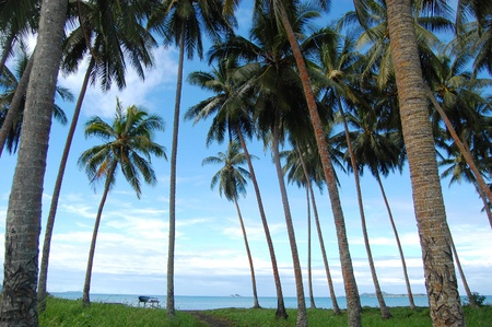 Nuova Guinea: Palme al litorale di mare, villaggio in Papua Nuova Guinea