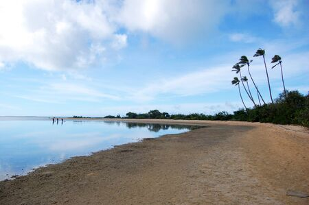 Sandy beach with palms, South Pacific, Tonga