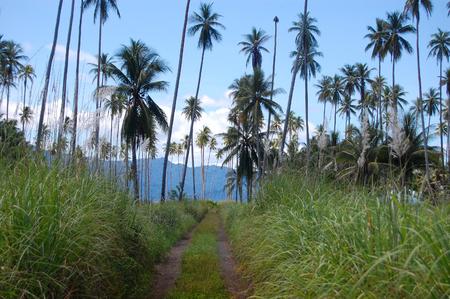 Nuova Guinea: Strada sterrata a tropici, Papua Nuova Guinea