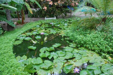 plantas acuaticas: Plantas de jard�n del agua en la isla de Maldivas, Thulhagiri Island Resort