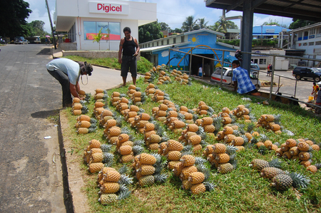 south pacific: Men and pineapples at roadside near town market, South Pacific, Tonga
