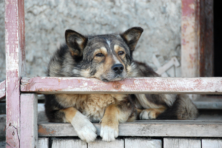 Old dog at staircase, Ayon Island, Chukotka, Russia