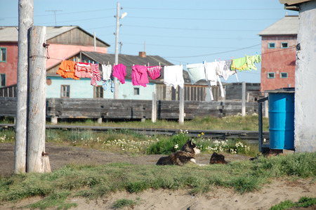 Dog under clothes drying on line at Ayon Island, Chukotka, Russia Stock Photo