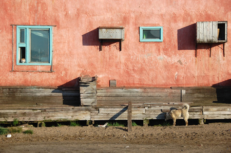 cat island: Dog and cat at residential building at Chukotka, Ayon Island, Russia Stock Photo