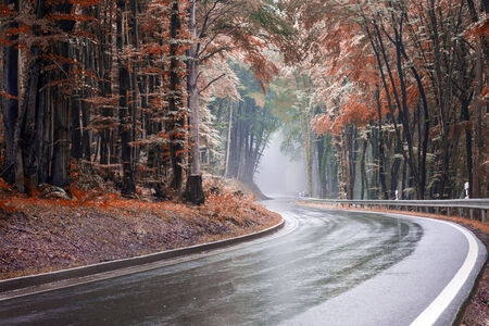 Image of a winding forest lane leading into a tunnel of fog edited in autumn colours with a toned look photo