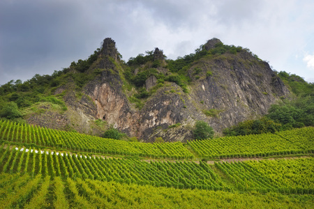craggy: Image of rows of grapevines leading to a craggy mountain face with a moody stormy sky