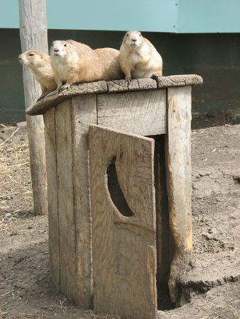 outhouse: prairie dogs on outhouse