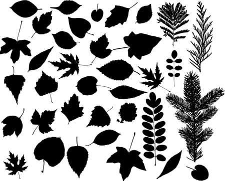 plats: lot of leaf vector