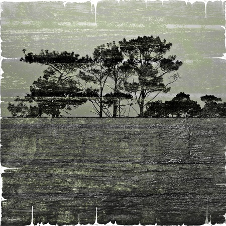 Photo collage of a grunge nature landscape with textures and a black frame. photo