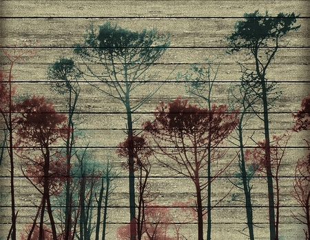 surrealist: Digital collage made it with pictures of big tall trees and wood texture in pale yellow, blue anr red colors.