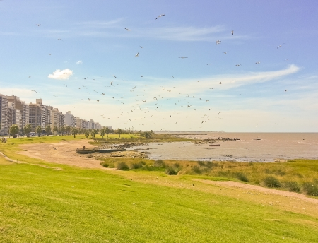 A group of seagulls flying in the coast of Montevideo, the capital city of Uruguay in South America photo