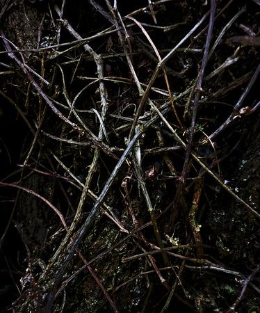 dark texture: naturaleza textura oscura hecha de ra�ces, plantas y hojas en el fondo negro