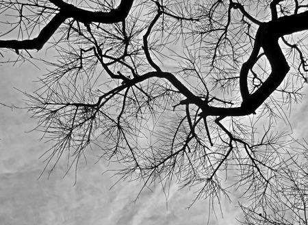 dark texture: Contraste de textura oscura naturaleza ramas de los �rboles de color negro con gris cielo nublado suave en vista de �ngulo loq