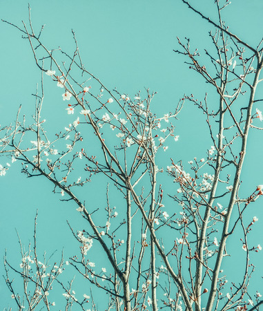 Beautiful nature digital edited photo of a tree detail with white flowers and cyan sky in vibrant colors. photo