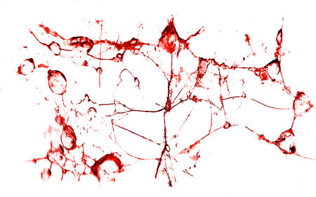 irregular shapes: Isolated texture with irregular shapes red liquid in white background Stock Photo