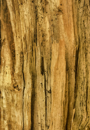 kindling: Kindling texture in warm tones in vertical format. Stock Photo