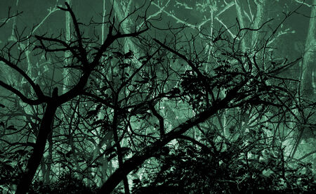 manipulated: Photo collage digital technique style dark beautiful dreamy night leafy nature landscape with trees silhouettes in green dark background in wide screen format