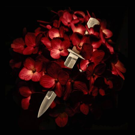 photo collage: Digital photo collage technique love deception concept showing a knife kitchen cutting a red flowers blossom in black background. Stock Photo