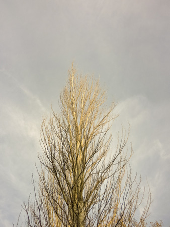 low angles: Low angle view photo nature scene of big and tall tree with only the sky at background. Stock Photo