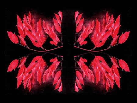 manipulation: Digital decorative photo manipulation artwork made it from a bunch of leaves in vivid and saturated red colors in black background.
