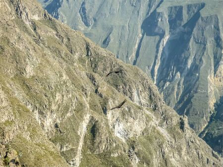 outsides: Condor flying in big mountains in Colca valley in the outsides of Arequipa city in Peru. Stock Photo